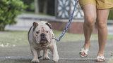 'Jaký pán, takový pes! Proč mají obézní lidé zvířecí mazlíčky s nadváhou?'