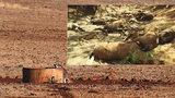"""""""Byla to hotová jatka."""" Vlna veder zabila v Austrálii tisíce zvířat"""