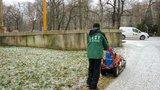 Věčný boj s plevelem: Ve Stromovce mu dávají zabrat infračerveným zářením