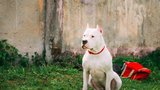 Majitel se zbavil dogy, která rozsápala seniorku (†91): Psa neutratil