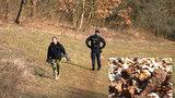 Zastaralá munice v lesích Divoké Šárky? Milovníci přírody by si měli dávat pozor