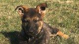Smrt štěněte ze Snídaně s Novou oplakává i psovod! Co ho mohlo zachránit?