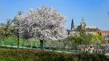 Velká velikonoční předpověď: Po mrazech dorazí do Česka opravdové jaro