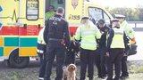 Na dálnici D1 u Prahy srazilo auto chodce (79). Zřejmě mu utekl pes