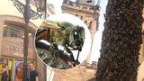 Kuriózní úkaz v centru Prahy: Včely obsypaly kandelábr jako by byl z cukru! Co tam dělaly?