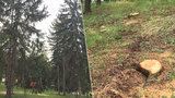 Praha 6 má problém s kůrovcem. Na Ořechovce museli pokácet 21 stromů