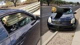 Bizarní nehoda: Řidič se srazil s kaktusem! Obří rostlina mu prolétla předním oknem