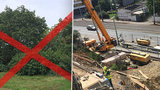 """U Klamovky se pokácí 113 stromů. """"Je to selhání radnice,"""" říkají místní"""