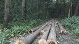 Kůrovec v Modřanské rokli: Brouci napadli 70 procent zdejších smrků! Musí se pokácet