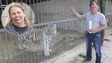 Berouskovi tygři hledají nový domov: Dostane je chovatelka s problematickou minulostí?