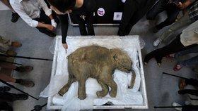Rusové chtějí oživit mamuta i lvy jeskynní. Staví klonovací centrum