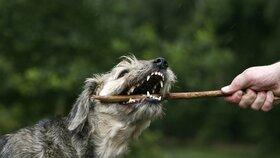 Záněty dásní ohrožují i zvířata. Pečujte proto o chrup svých psů