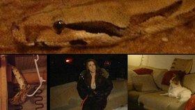 Pozor, kam si sedáte: Žena našla v použitém gauči obřího hroznýše!
