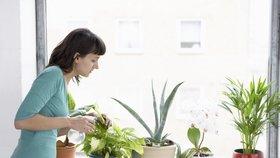 Malý průvodce pokojovými květinami: Tyhle vám nejlépe vyčistí vzduch