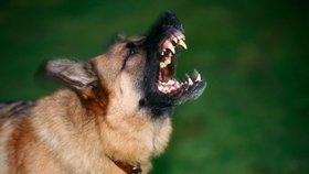Pes na ulici v Praze pokousal tři ženy! Skončily v nemocnici