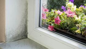 Češi neumí větrat, čtvrtinu domácností trápí plísně