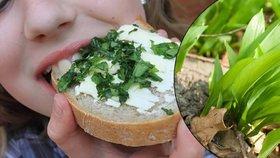 Sezóna medvědího česneku vrcholí: Obsah vitaminu C překvapí! Má ho víc, než oblíbené ovoce