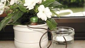 Jak zabezpečit pokojové květiny před odjezdem na dovolenou