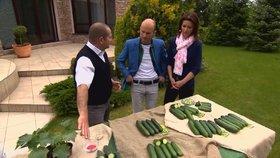 Jak na bohatou podzimní úrodu okurek? Gondíci vám poradí
