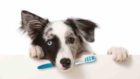 Čistíte svému psovi zuby stejně poctivě jako sobě? Pokud ne, je čas začít!