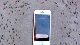 Stovky mravenců rotují kolem zvonícího iPhonu, ovládají je prý elektromagnetické vlny