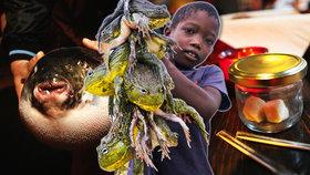 Nejnebezpečnější jídla světa: Za tyhle delikatesy můžete zaplatit životem!