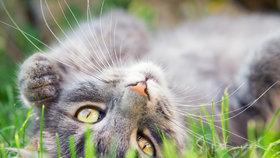 Kočka Česka 2015: 4 hlavní důvody, proč přihlásit svou kočku do soutěže