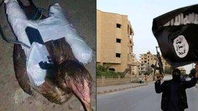 Máme ptáky a nebojíme se je použít: Bizarní protiletadlová obrana islamistů