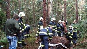 U Slaného se srazila tři auta: Z dodávky převážející zvířata uprchl kůň