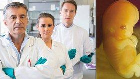Britští vědci v roli Frankensteina: Budou upravovat lidská embrya