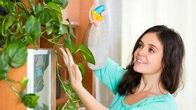 Jaro klepe na vrátka! 5 rad, jak probudit květiny ze zimního spánku!