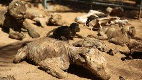 Zoo zkázy: Ze zvířat umučených hlady se staly mumie