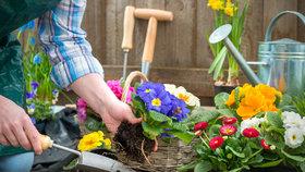 Probuďte zahradu po zimě: Rady na krtka, pro záhony, keře i stromy
