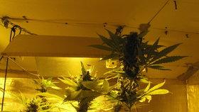 Rozsáhlá drogová razie na Chebsku: Zadrženo 8 dealerů marihuany a pervitinu