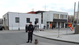 Český pes hlídal v Makedonii uprchlíky: Uštkl ho had!