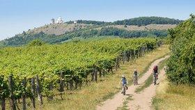 Zloděj řádil hůř než mráz: Z vinice zmizely stovky sazenic vinné révy!
