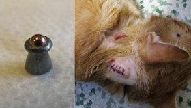 Neznámý lump v Hodoníně vraždí kočky: Má speciální zbraň