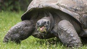 Želvy pod drobnohledem: Exkluzivní 360stupňové foto z želví svačinky