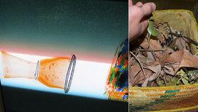 221 chameleonů, užovka a 15 gekonů: Cizinec do Čech v kufru pašoval exotická zvířata