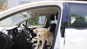 Zvířata v autě – přečtěte si, jak správně převážet chlupaté kamarády?
