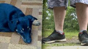 Psychopat umlátil tyčí sousedova psa: Byla to nešťastná náhoda, mrzí mě to, vymlouvá se