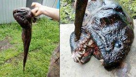 Rybáři vytáhli z vody děsivého mutanta! Doteď neví, co vlastně chytili