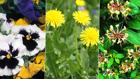 Dejte si na zub něco krásného: Květiny, které můžete jíst