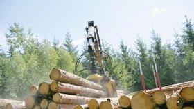 """""""Přijdeme o peníze."""" Majitelé lesů žádají, aby zákaz těžby dřeva ministerstvo zrušilo"""