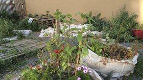 Stovka lidí pěstuje zeleninu v Praze na ulici. Rostou jim rajčata, papriky i dýně