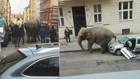Po Praze se procházel obrovský slon. Rozsedl i auto
