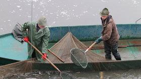 """Připlují kapříci? Na rybníku v Rohožníku se schyluje k """"mistrovství"""" v rybolovu"""