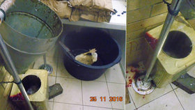 V tržnici SAPA nelegálně zabíjeli kachny. Vnitřnosti se povalovaly u zeleniny
