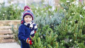 Vybíráte vánoční stromek? Na tohle pozor! Plus tipy, jak o něj pečovat