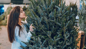 Živý vánoční stromek neopadá, když ho správně vyberete. Jak na to?